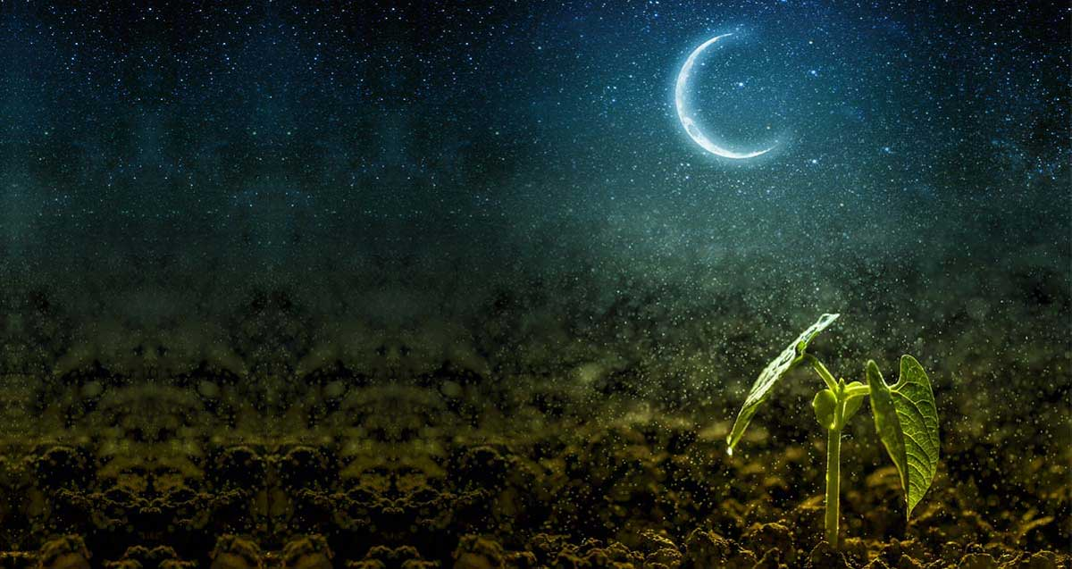 Young plant shoot under the Moon